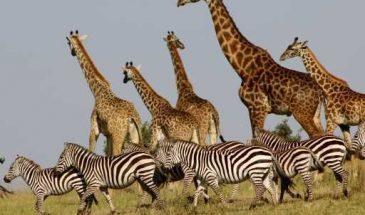 Nairobi National Park (NNP) Half-Day Tour – 5-6 hours