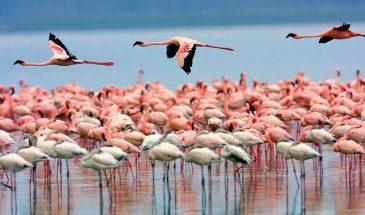 3-Day Lake Nakuru Safari