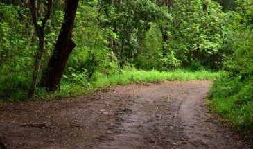 Oloolua Nature Trail Guided Tour – 4 hours